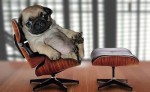 pug-on-mini-eames-chair